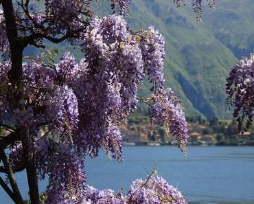 Der Comer See: Hochalpine Landschaft - mediterrane Pflanzenwelt