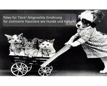 """Paleo für Tiere? Artgerechte Ernährung für """"zivilisierte"""" Haustiere wie Hunde und Katzen?"""