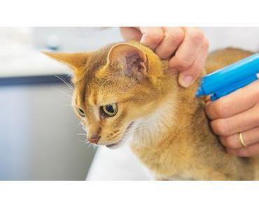 Katzen chippen lassen – Sinn, Kosten und weitere Infos