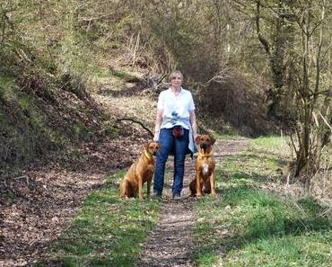 Drei Tipps für geführte Wanderungen mit Hund