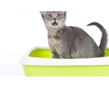 10 Tipps zum Thema Katzenklo