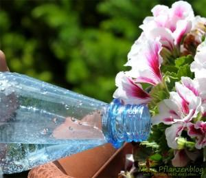 """Gießen mit """"abgestandenem"""" Mineralwasser"""