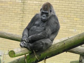 """Mach Dich doch zum Affen:  """"Ackerbau und Inzucht""""  oder ein Lehrstück für unsere heutige """"Businesswelt""""?"""