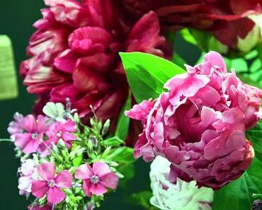 Pfingstrose - die Rose meines Herzens...