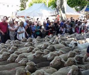 Von Schafen und Touristen