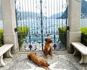Drei unbeschwerte Aufenthalte mit Hund im Hotel